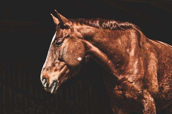 zbilansowane pasze dla koni starszych
