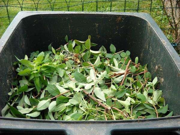 utylizacja odpadów spożywczych z baru
